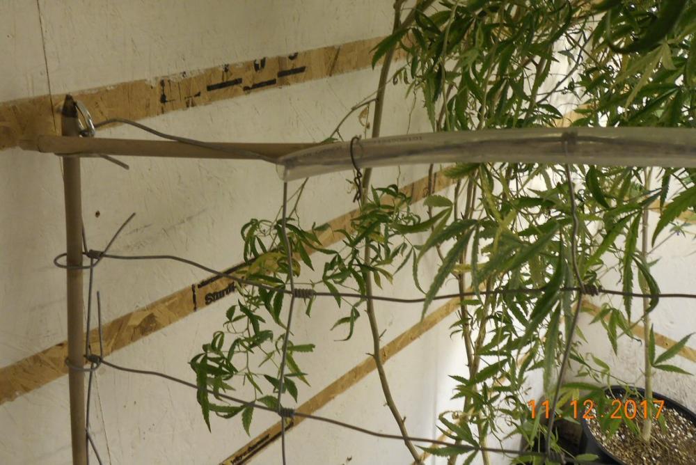 BambooAndTubing02.jpg
